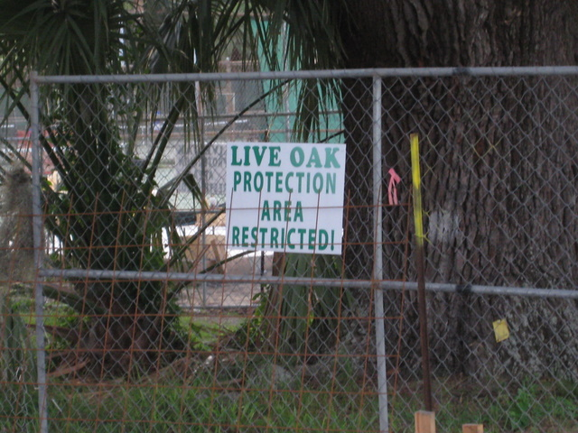 Sign placed after damage already done to old live oak in City Park.